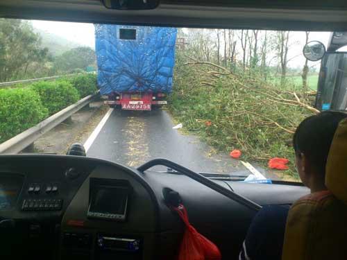 汕尾/高速上汕尾路段倒树占了一半车道。杜质摄