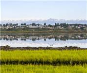 新疆伊犁河谷稻田描绘生态画卷