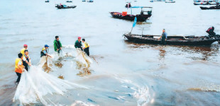 鄱阳湖春季禁渔期结束