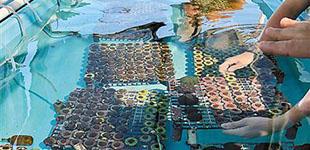 """水下苗圃、特殊水槽再造""""海洋长城"""""""