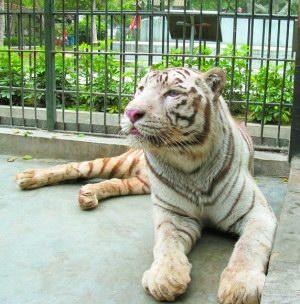 汕头市中山公园动物园