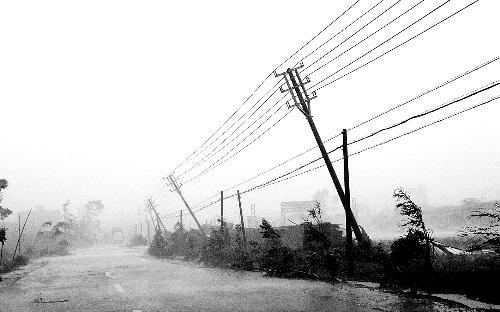 进入吉兆湾公路两旁的电线杆被台风吹歪了. 李波 摄